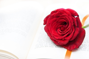 Rose And Book, A Tradition In Catalonia